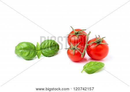 Sprig Fresh Tomato With A Sprig Of Green Basil.