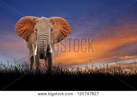 Elephant On The Background Of Sunset Sky