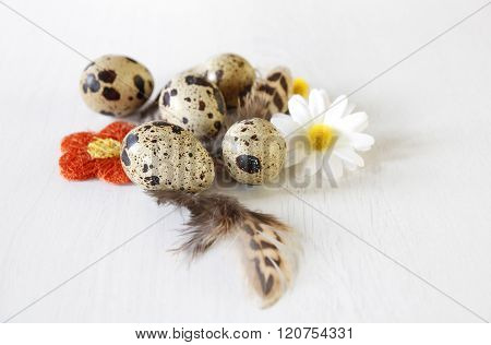 Easter Quail Eggs With Feathers And Flowers Decorattion