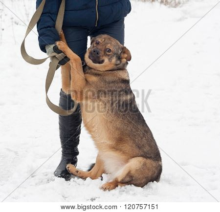 Thick Brown Mongrel Dog Sitting Near Man Legs On Snow