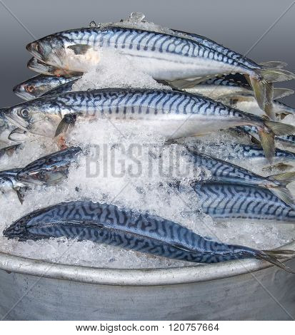 Bowl With Iced Mackerels