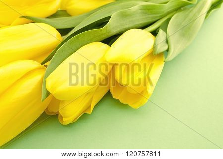 Yellow Tulips On Green Background With Space For Message.  Mother's Day Background. Soft Focus