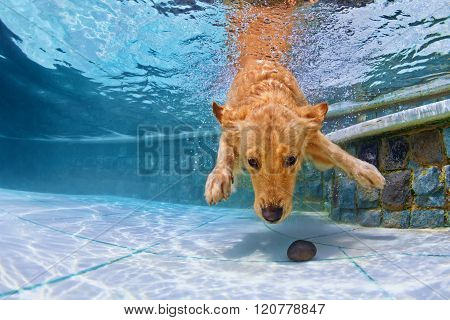 Dog Swimming Underwater In The Pool