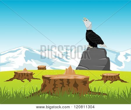 Sawed down wood and eagle on stone