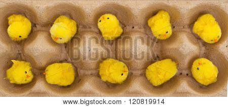 Easter Chicks In An Eggbox