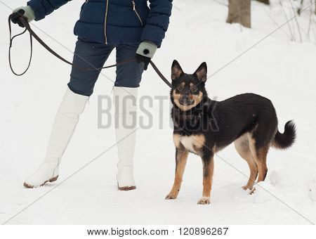 Black and gray mongrel dog standing on white snow