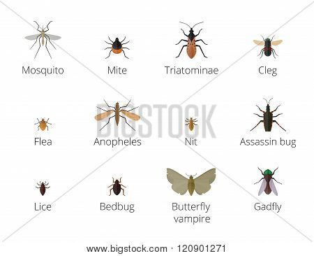 Insect parasites vector.