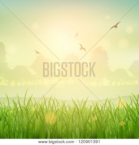 Nature background of a grassy landscape