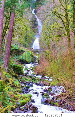 River alongside a lush green temperate forest with Bridalveil Waterfall beyond taken in the Columbia River Gorge, OR