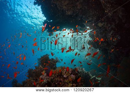 Coral reefs with tiny fish in the Ras Muhammad National Park. Egypt