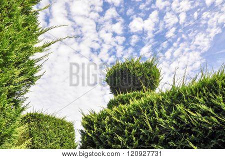 Hedge Maze: Sky View