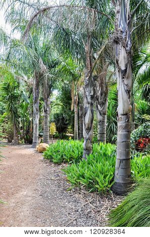 Tropical Trees along the Path