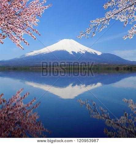 Mt.fuji With Water Reflection At Lake Yamanaka, Japan