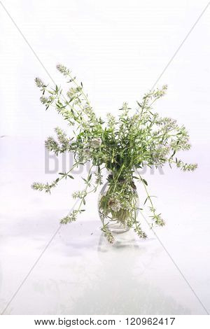thyme ng vase on white background, bouquet of blooming thyme