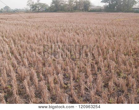 Global Warming Makes Soil Arid And Rainless