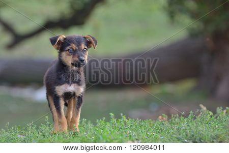 Sad Homeless Stray Dog