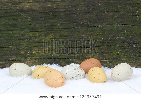 eggs lying in snow in front of an old wooden wall