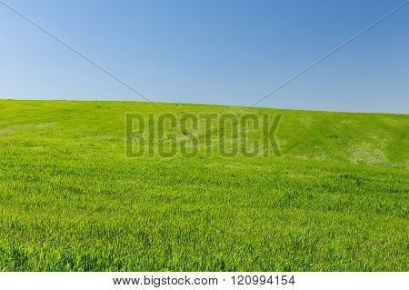 Wheat field on a background of the blue sky