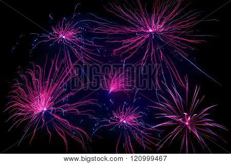 Violet Fireworks On Black Background