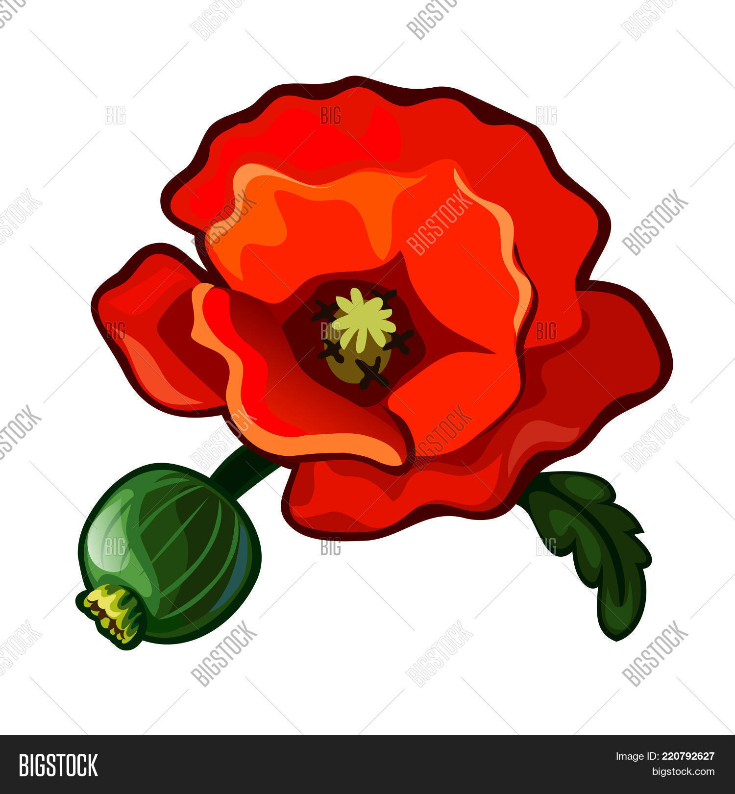 Poppy Flower Vector Vector Photo Free Trial Bigstock