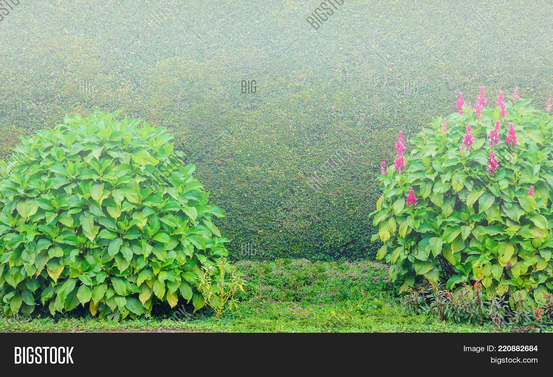 Flower Tree Bush Wall Image \u0026 Photo (Free Trial)