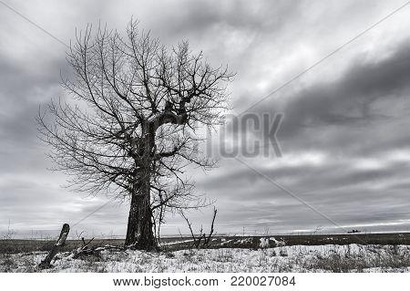 Dramatic B&W of barren tree in a snowy field near Davenport, Washington.