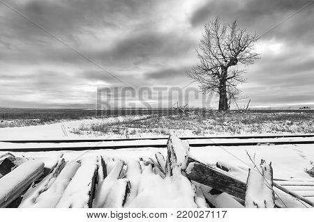 B&W of tree in field by tracks in winter near Davenport, Washington.