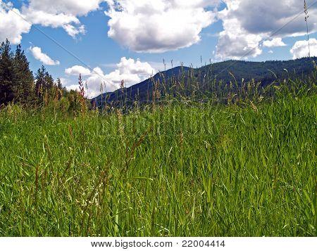 Травяной поле с горы и пасмурно голубое небо в фоновом режиме