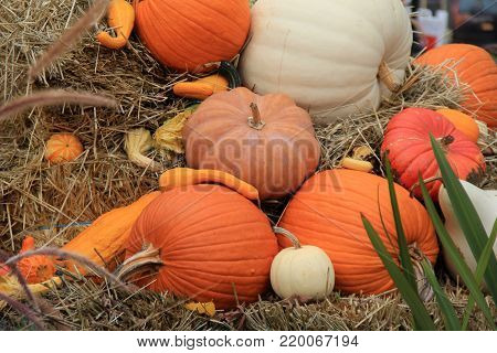 Horizontal image of bright and colorful pumpkins and squash, tucked between ornamental grasses and bales of hay
