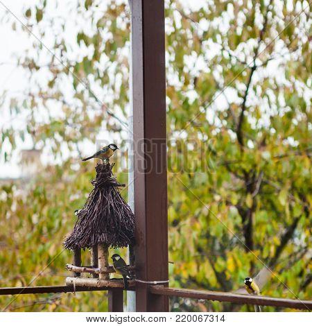 Great titmouse birds getting sunflower seeds at a wooden bird feeder