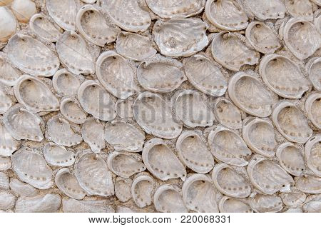 Open sea shell in cement house wall like background decoration texture