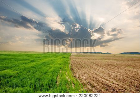 Two different parcels on a field with different stages of plant growth and a nice contrast between green and brown and an atmospheric phenomenon of sun rays bursting through a cloud