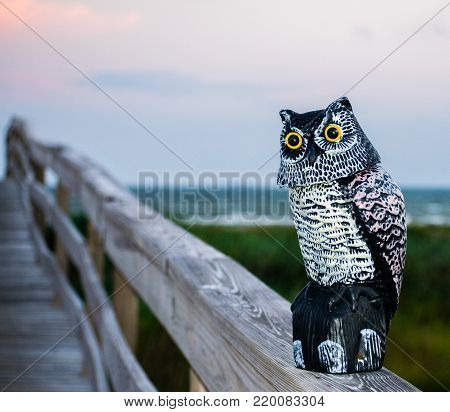 Sentinel owl perched on the railing of a walkway to the beach to frighten other birds away.