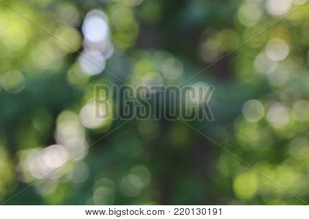 A de focused green background with bokeh