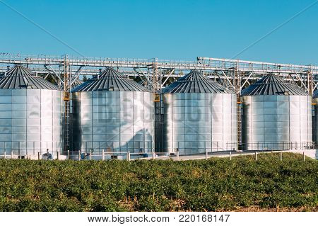 Modern Granary, Grain-drying Complex, Commercial Grain Or Seed Silos In Sunny Summer Rural Landscape. Corn Dryer Silos, Inland Grain Terminal, Grain Elevators Standing In A Field.