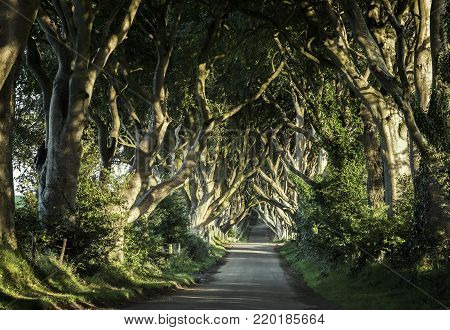 The Dark Hedges is a unique stretch of the Bregagh Road near Armoy, in Northern Ireland, that looks like something from a Tim Burton movie. Over the past 300 years, the Beech trees guarding either side of the lane have reached up and across to each other,