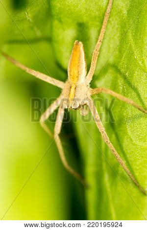 Spider on a green leaf. close-up . In the park in nature