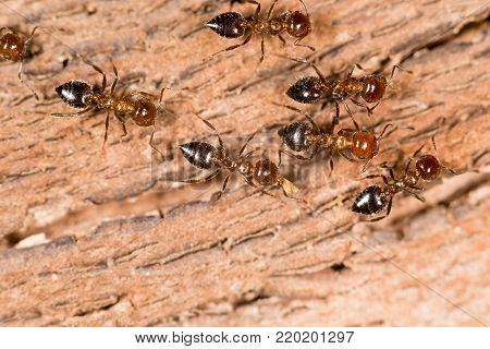 ants on wood. close-up . In the park in nature