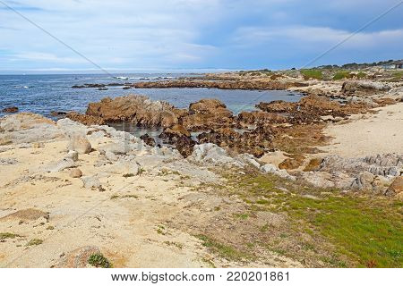 Low tide reveals algae and tide pools below rocky bluffs at Asilomar State Beach in Pacific Grove on the Monterey Peninsula of California