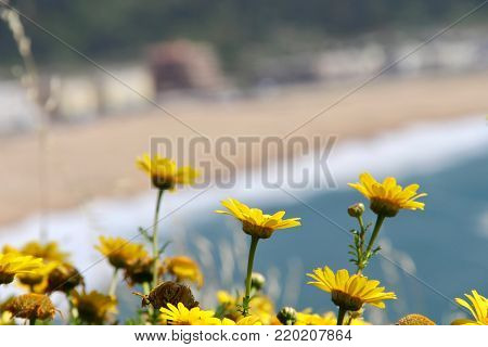 Flowers with a beautiful beach in the background