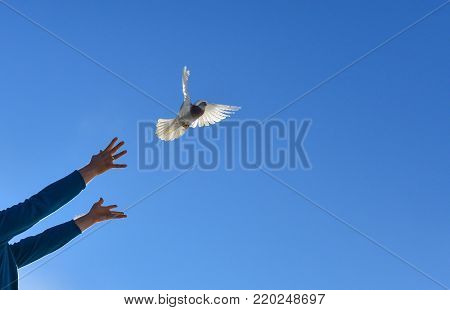 leave to the living area & freedom & release the dove