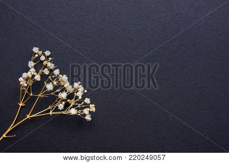 Twig of Small White Dry Spring Flowers on Black Background in Vintage Style. Easter Mother's Day Concept. Minimalist Style. Website Banner Template Copy Space