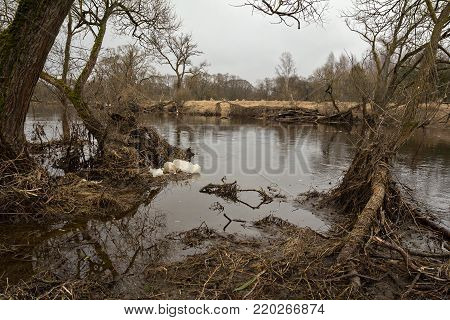 Spring landscape with a view of the river during floods. Early spring on the fast river after ice drift. March in Central Europe.