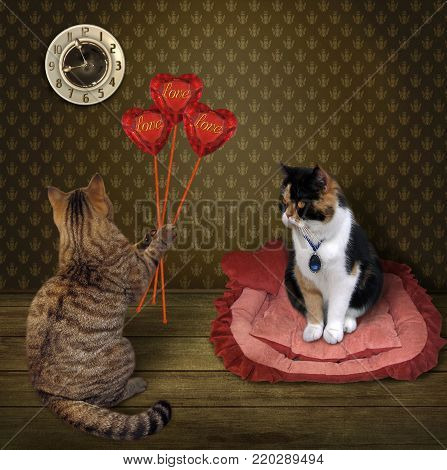 The cat gives a bouquet of ruby hearts to his beloved in the morning.