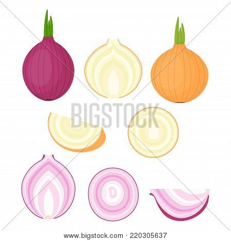 set of colorful half, slice and whole of onion, different varieties of onions are located on a white background