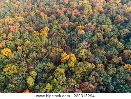 Autumn forest with green, red and yellow leaves, aerial drone view