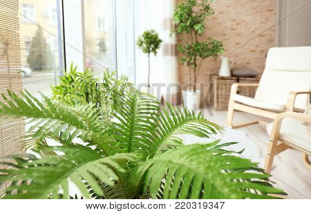 Houseplants and comfortable armchair in modern living room