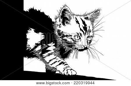 Kitten illustration art vector animals pet theme