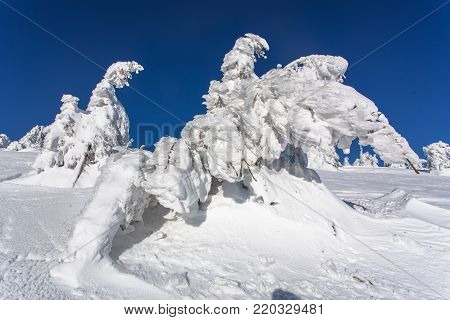 delightful winter landscape of a Christmas tree in the snow. snow-white beauty
