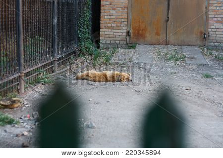 Cute dog sleeping on the ground outside the fence.